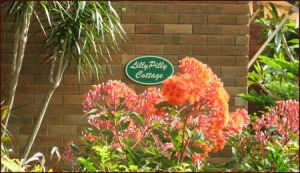 Lillypilly - Accommodation Noosa