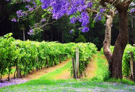 Bago Vineyards - Accommodation Noosa