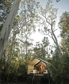 Paperbark Camp - Accommodation Noosa