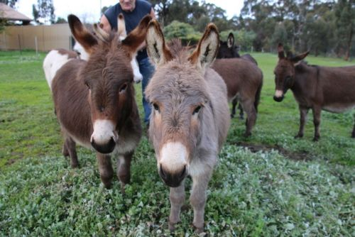 Donkey Tales Farm Cottages - Accommodation Noosa