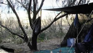Main Beach Foreshore Camping Grounds - Accommodation Noosa