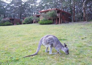 Jenolan Caves Cottages - Accommodation Noosa