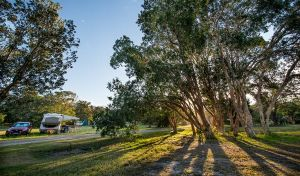 Delicate campground - Accommodation Noosa
