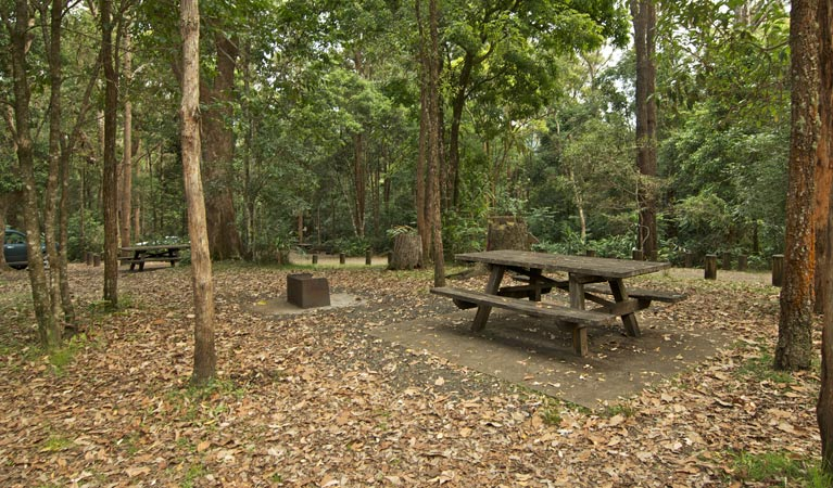 Sheepstation Creek campground - Accommodation Noosa