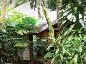 Heritage Lodge and Spa - In the Daintree - Accommodation Noosa