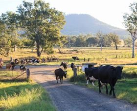 Tommerups Dairy Farmstay - Accommodation Noosa