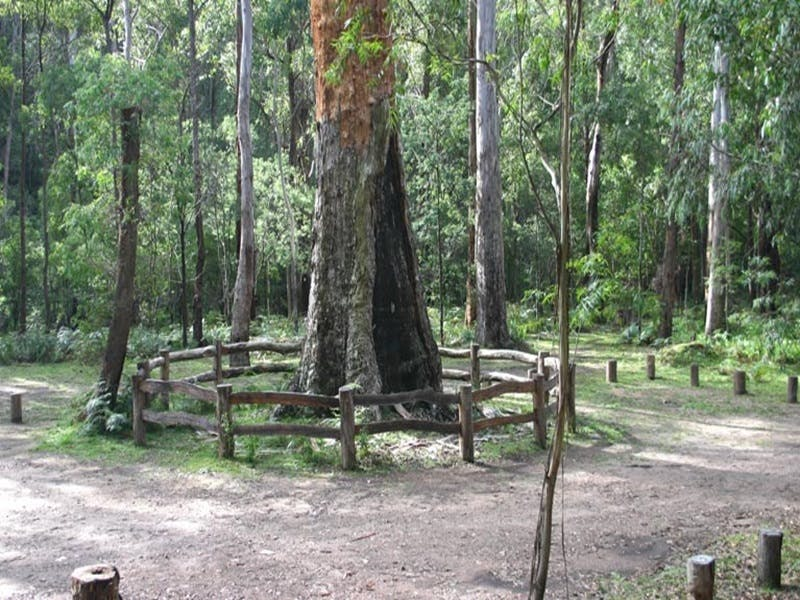 Six Mile Creek campground - Accommodation Noosa