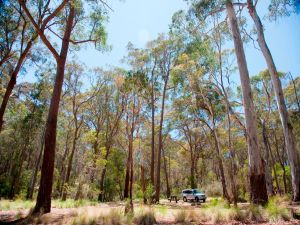 Coolah Tops National Park Camping - Accommodation Noosa