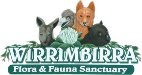 Wirrimbirra Sanctuary - Accommodation Noosa