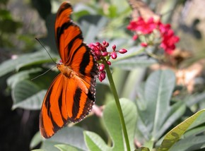 Butterfly Farm - Accommodation Noosa