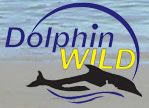 Dolphin Wild - Accommodation Noosa