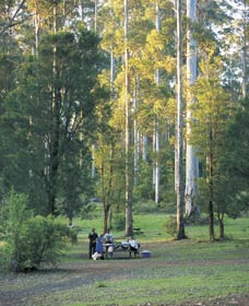 Big Brook Arboretum - Accommodation Noosa
