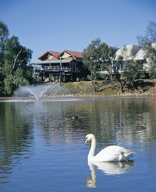 White Swans - Accommodation Noosa