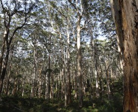 Boranup Karri Forest - Accommodation Noosa