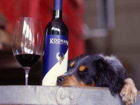 Koonara Wines - Accommodation Noosa