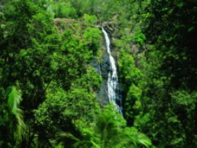 Kondalilla National Park - Accommodation Noosa