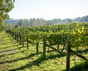 Surveyor's Hill Vineyards - Accommodation Noosa