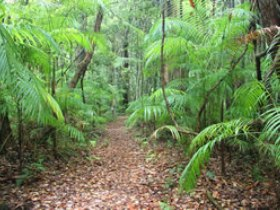 Delicia Road Conservation Park - Accommodation Noosa