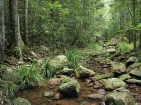 Amamoor State Forest - Accommodation Noosa