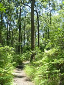 Mapleton Falls National Park - Accommodation Noosa