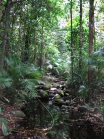 Mossman Gorge Rainforest Circuit Track Daintree National Park - Accommodation Noosa