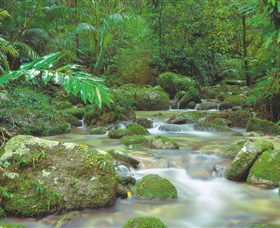 Mossman Gorge Daintree National Park - Accommodation Noosa