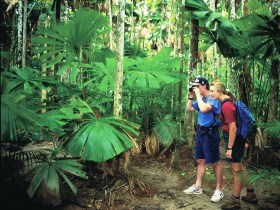 Mount Sorrow Ridge Trail Daintree National Park - Accommodation Noosa