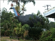 The Big Cassowary - Accommodation Noosa