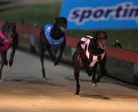 Dapto Dogs - Accommodation Noosa