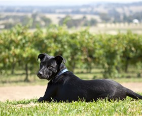 Moothi Estate Vineyard and Cellar Door - Accommodation Noosa