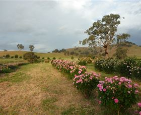 Damasque Rose Oil Farm - Accommodation Noosa