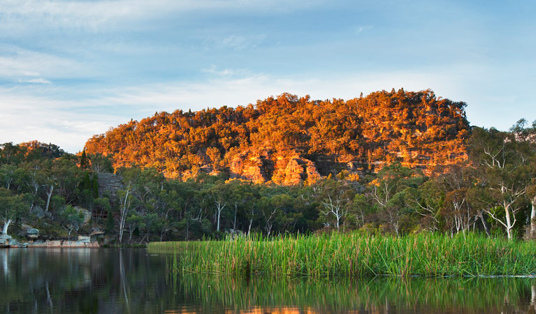 Wollemi National Park - Accommodation Noosa