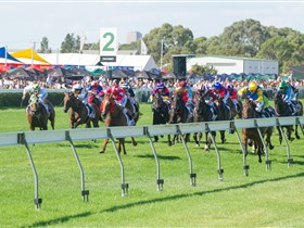 Morphettville Racecourse - Accommodation Noosa