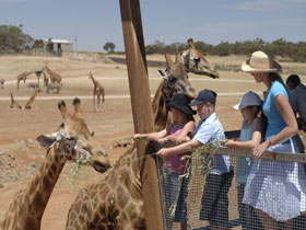 Monarto Open Range Zoo - Accommodation Noosa