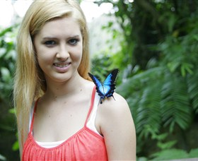 Australian Butterfly Sanctuary - Accommodation Noosa