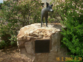 Dingo Statue - Accommodation Noosa