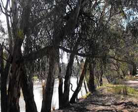 Mia Forest Drives Narrandera - Accommodation Noosa