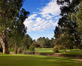 Commercial Golf Course - Accommodation Noosa
