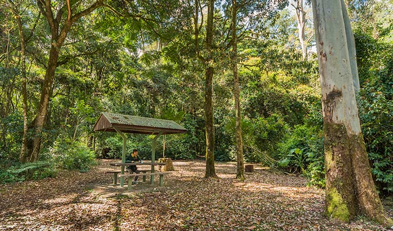 Tooloom National Park - Accommodation Noosa