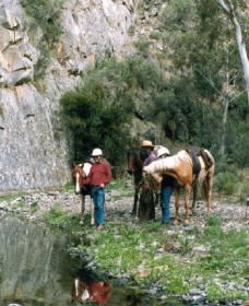 Yarramba Horse Riding - Accommodation Noosa