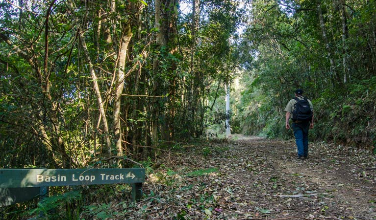 Basin Loop track - Accommodation Noosa