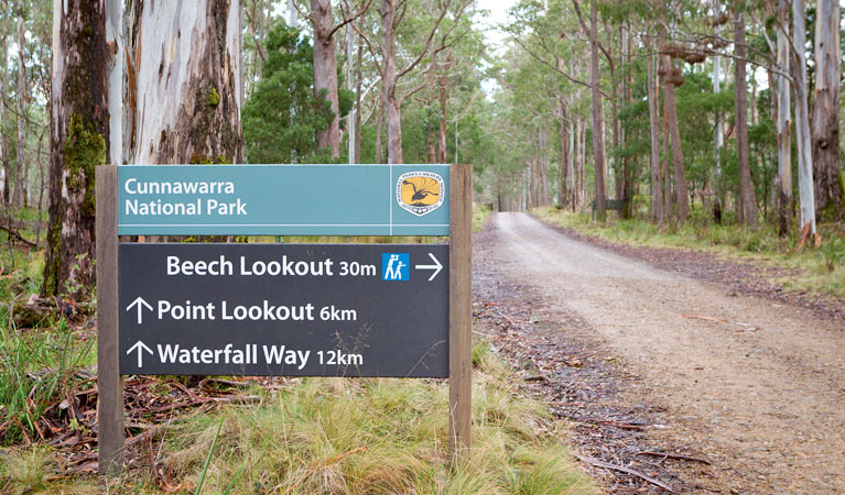 Beech lookout - Accommodation Noosa