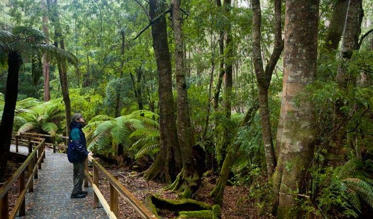 Monga National Park - Accommodation Noosa