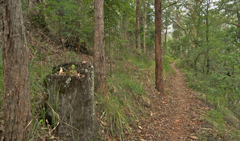 Border loop walk - Accommodation Noosa