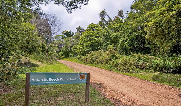 Antarctic Beech picnic area - Accommodation Noosa