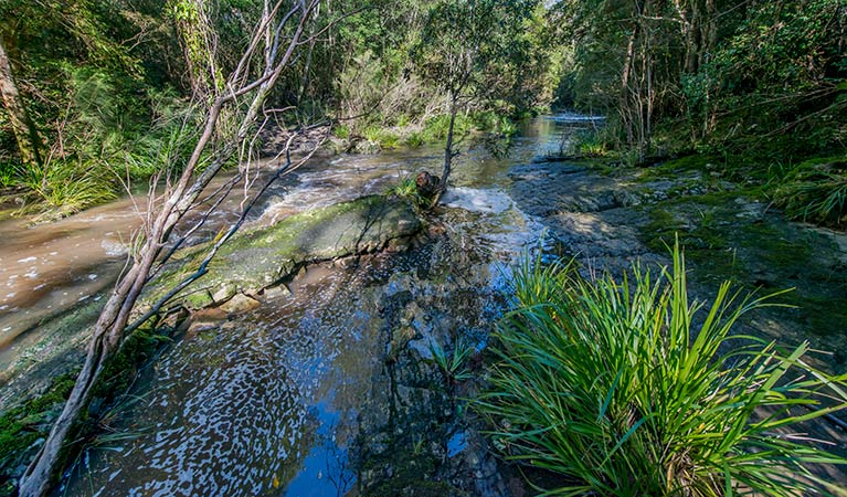 Dawson River walking track - Accommodation Noosa