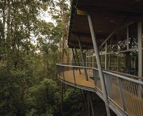 Tarkine Forest Adventures - Dismal Swamp - Accommodation Noosa