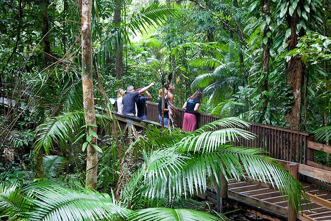 Full Day Daintree Rainforest and Mossman Gorge Tour