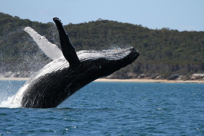 Hervey Bay Ultimate Whale Watching Cruise