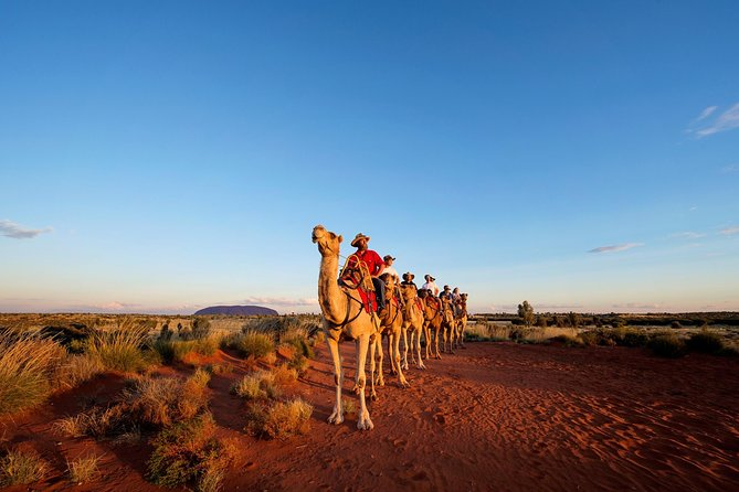 Uluru Camel Express Sunrise or Sunset Tours - Accommodation Noosa